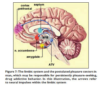 The limbic system and the postulated pleasure centers in man